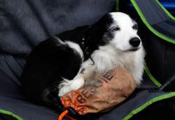 Rescue Dog in Alaska