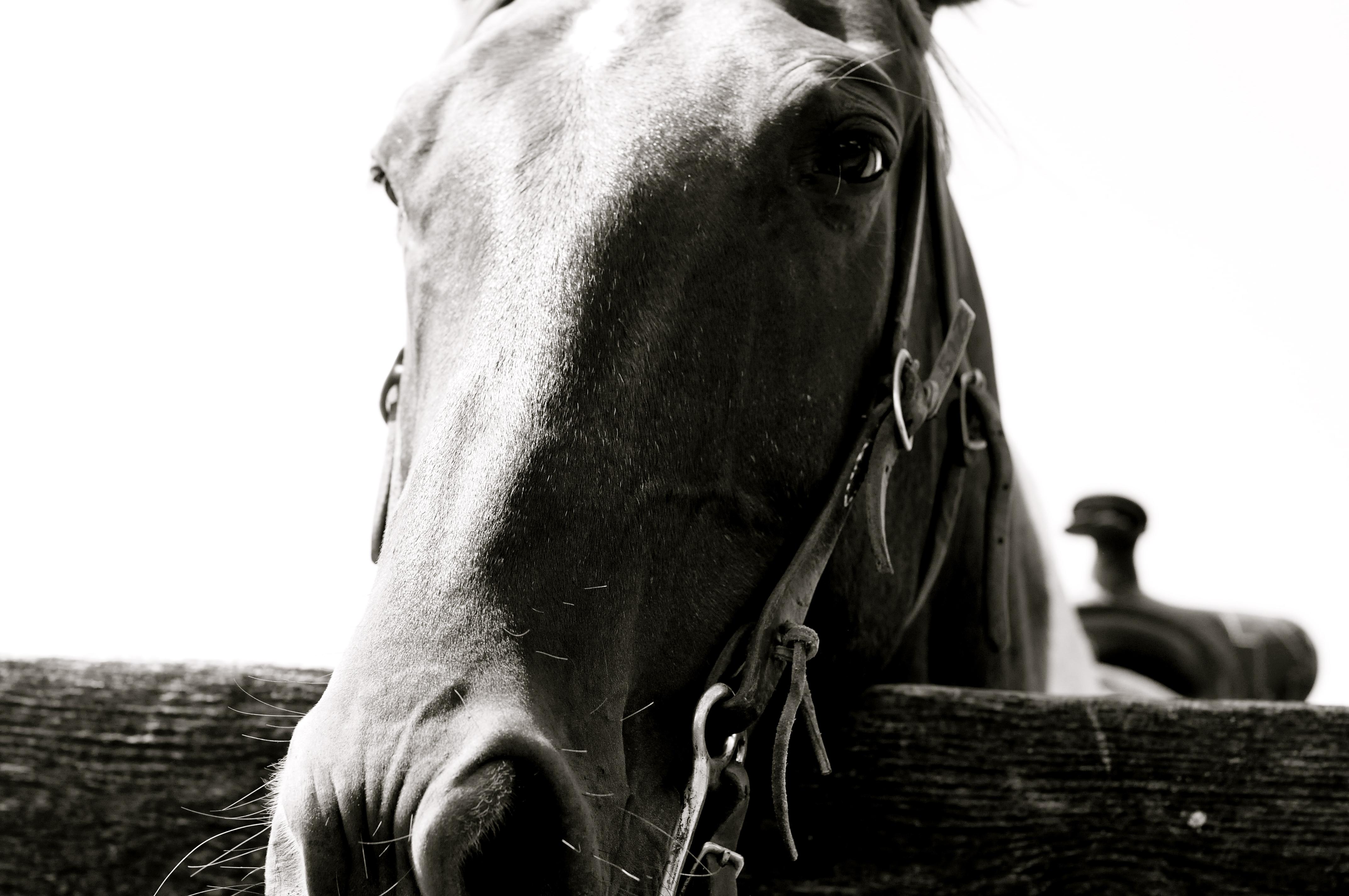 Horse, Montauk