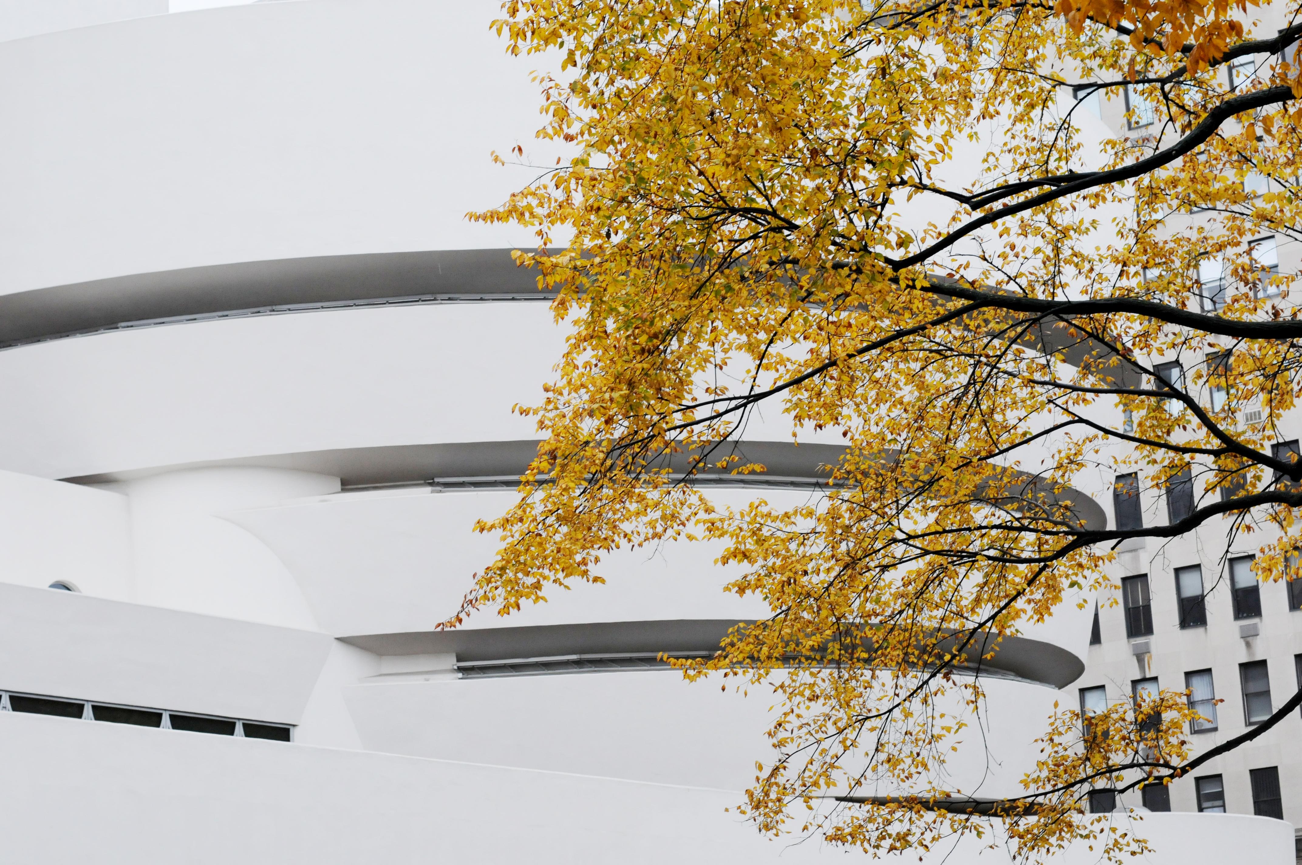 Guggenheim, Autumn