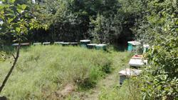 Unsere Bienenstöcke