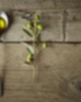 Rama de oliva y aceite de oliva
