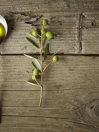 Olive Branch og Olive Oil