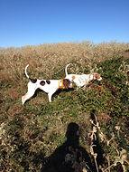 Bird Dogs, Waterfowl Field Gear in Allen, TX