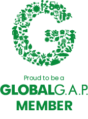 global gap member logo.png