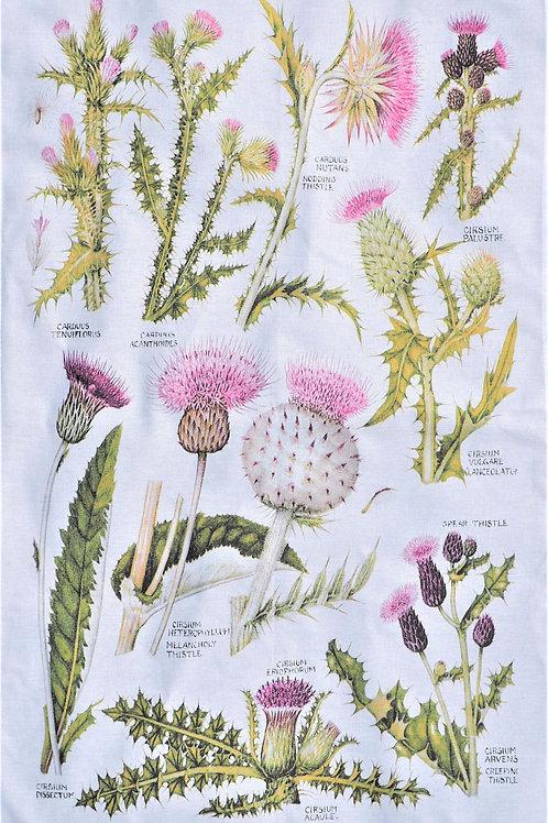 Botanical Tea Towel - Thistle