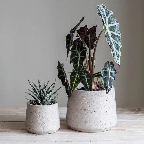 Two Concrete Plant Pots with house plants