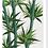 Thumbnail: Bamboo - Greetings Card