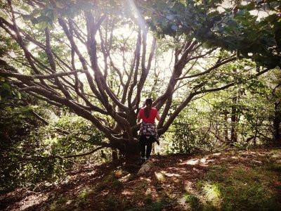 L'albero.