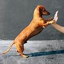 стрижка собак зоосалон барбосик крестовский остров