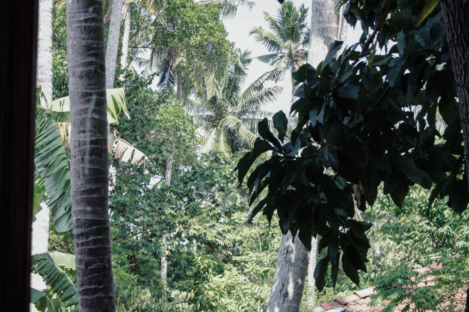 dorm view jungle