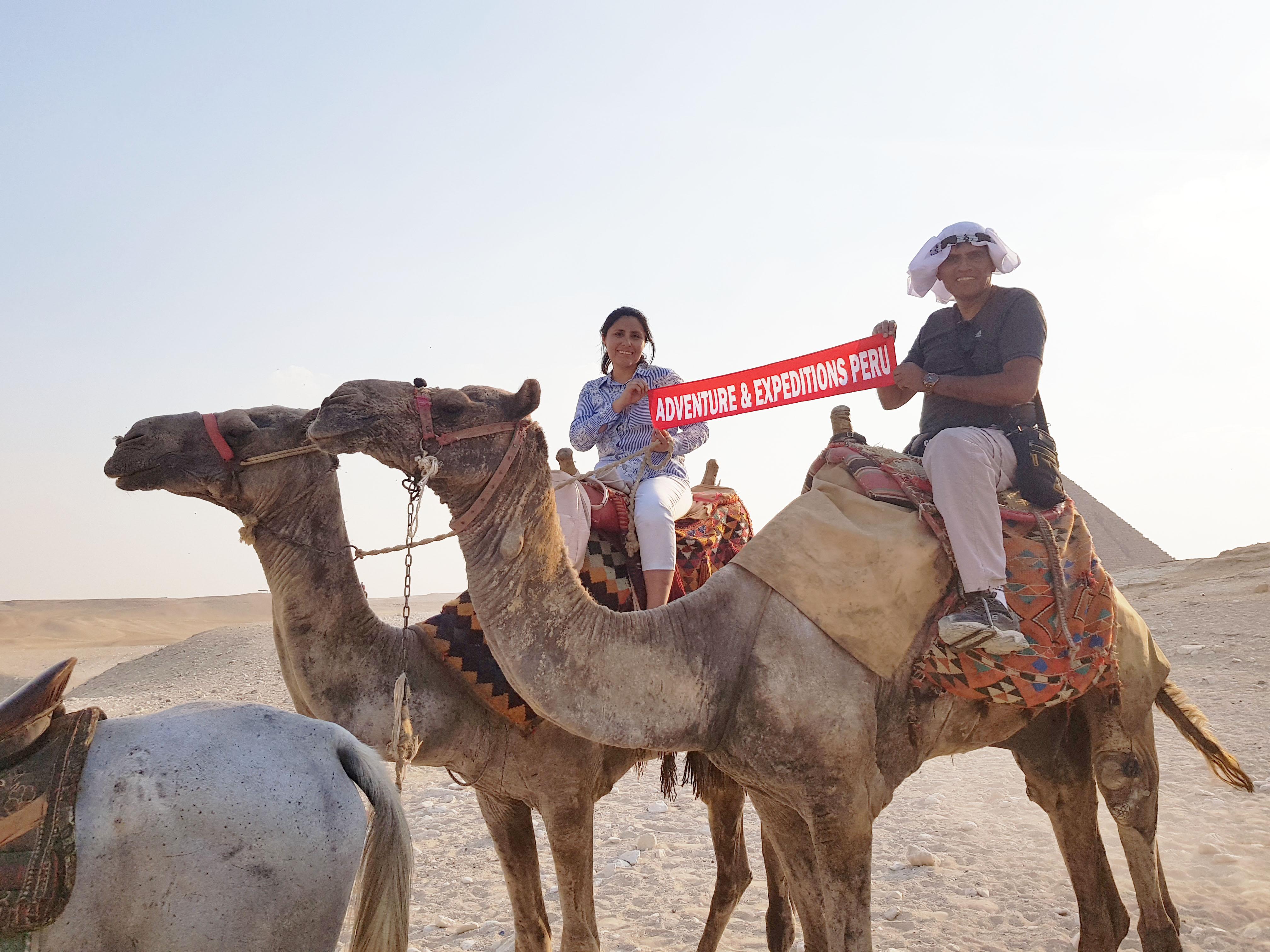 Camellos en desierto Sahara - Egipto
