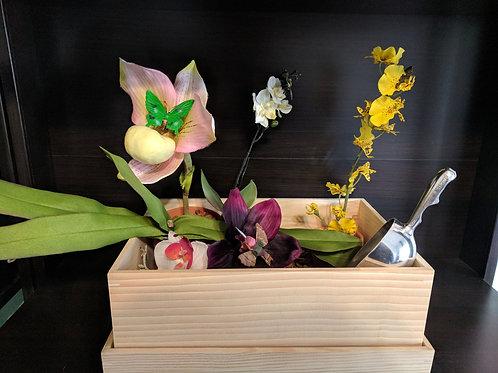 Orchids Sensory Box
