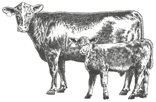Cow_&_Calf_fin-01.png