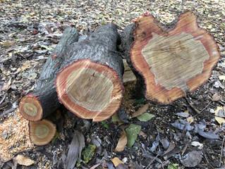 Superior Tree Breeding Program