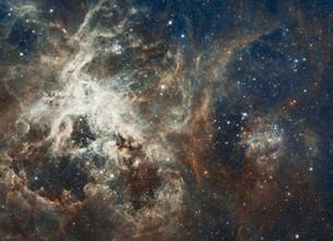 『死んだ人は星になれるの?』とても素敵な回答を見つけました!