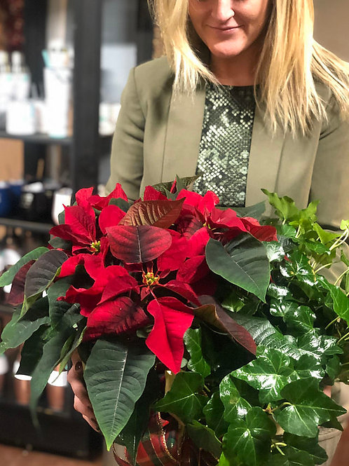 Flower Alley : Poinsettia and Ivy Basket