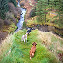 Our dogs on the Fairy Knowe Trail (one of the many signposted Barr Trails)