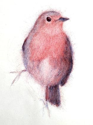 Petirrojo dibujo de le frère