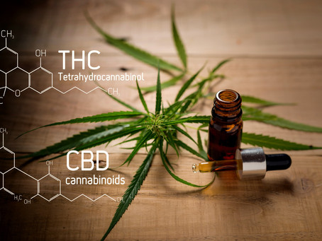 cannabis + simvastatin