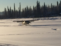 Maule on skis at Chena Marina