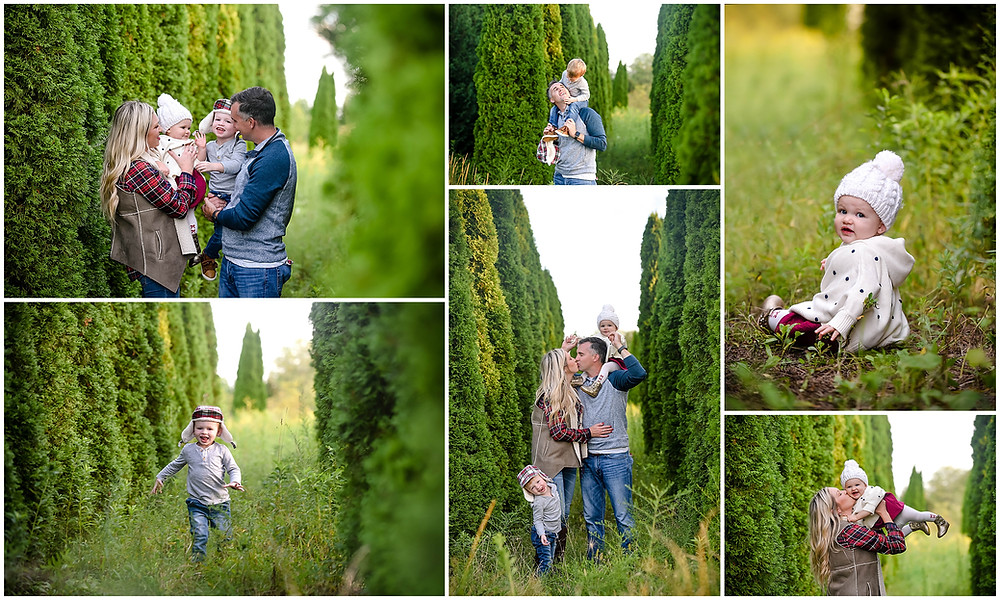Naperville Tree Farm Photo Session, Tree Farm Mini Session
