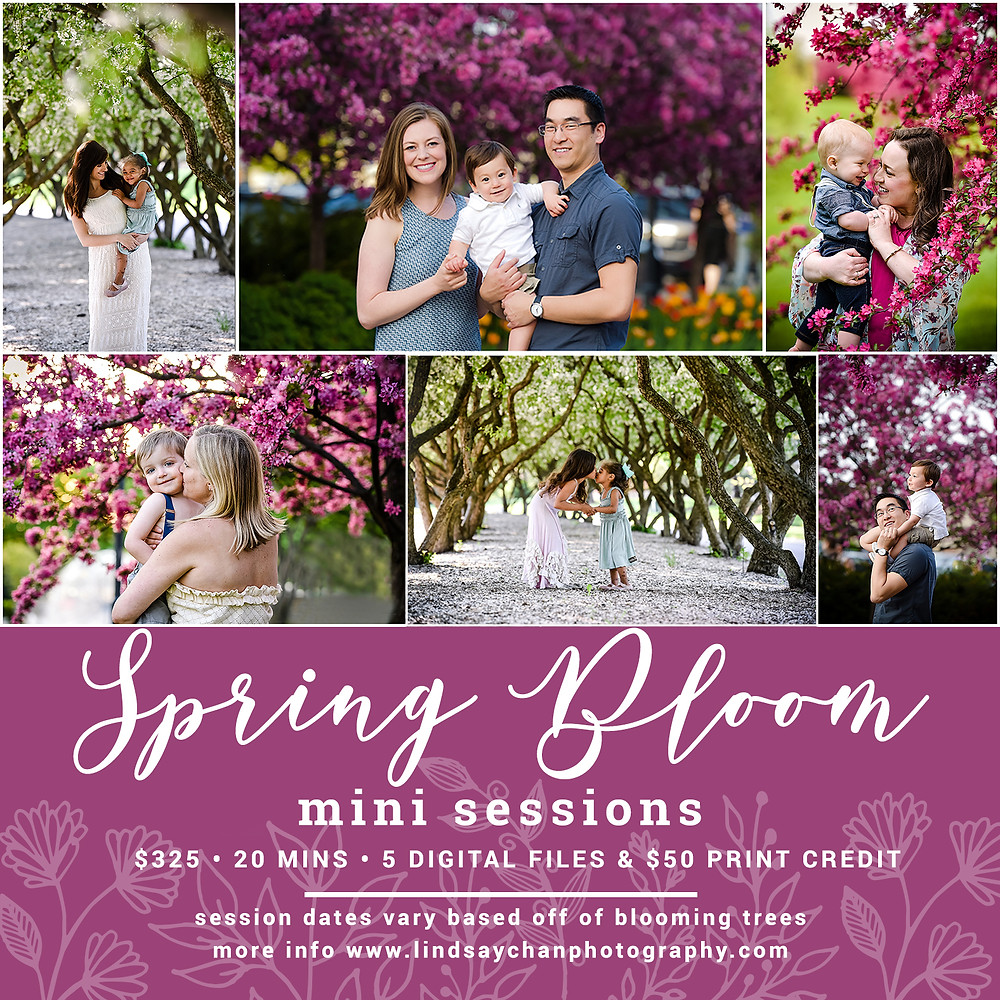Naperville Photographer, Lindsay Chan Photography, Spring Mini Sessions, Pink Tree Blooms, Spring Photographer