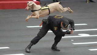policia-canina Peru.jpg