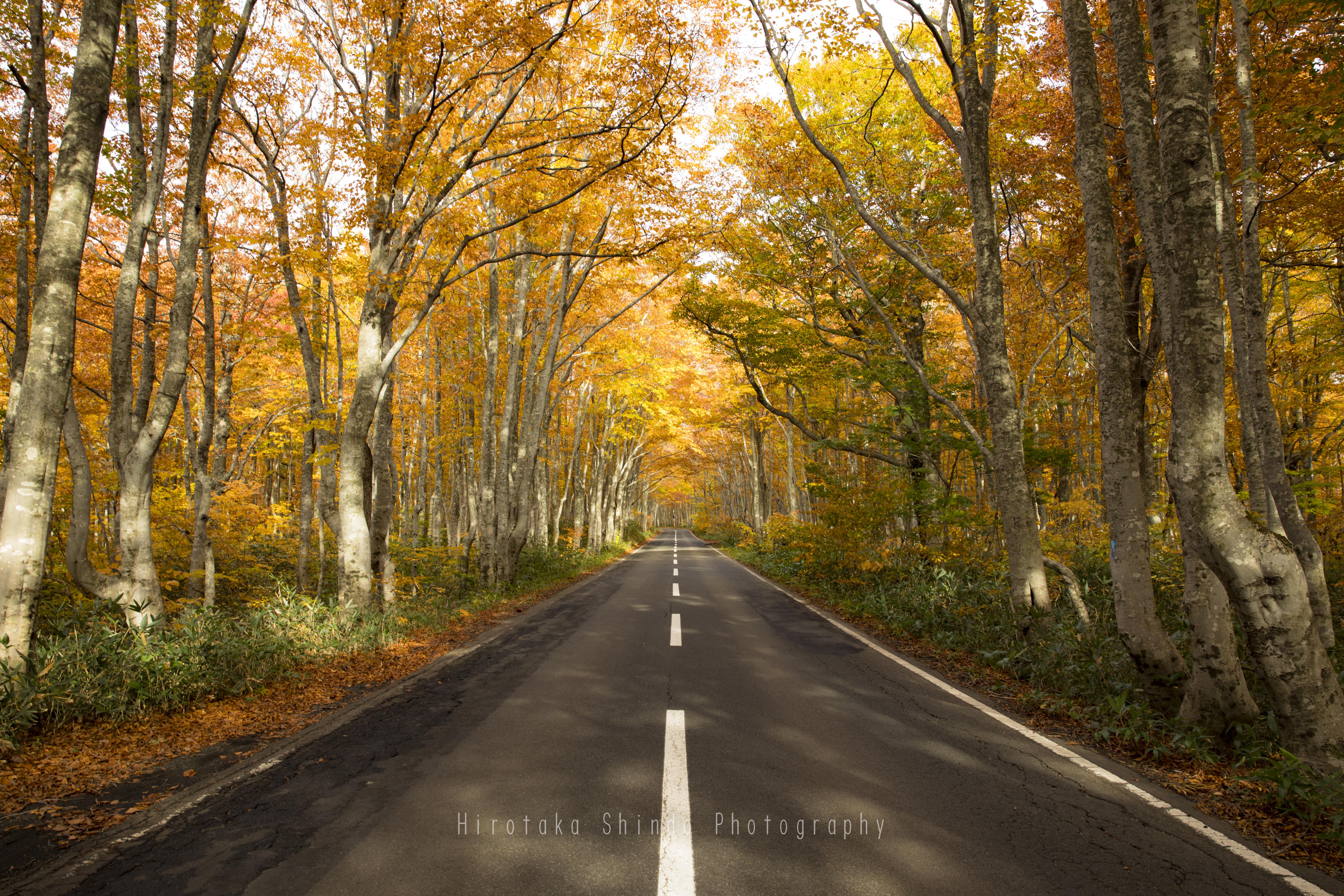 黄金色の路