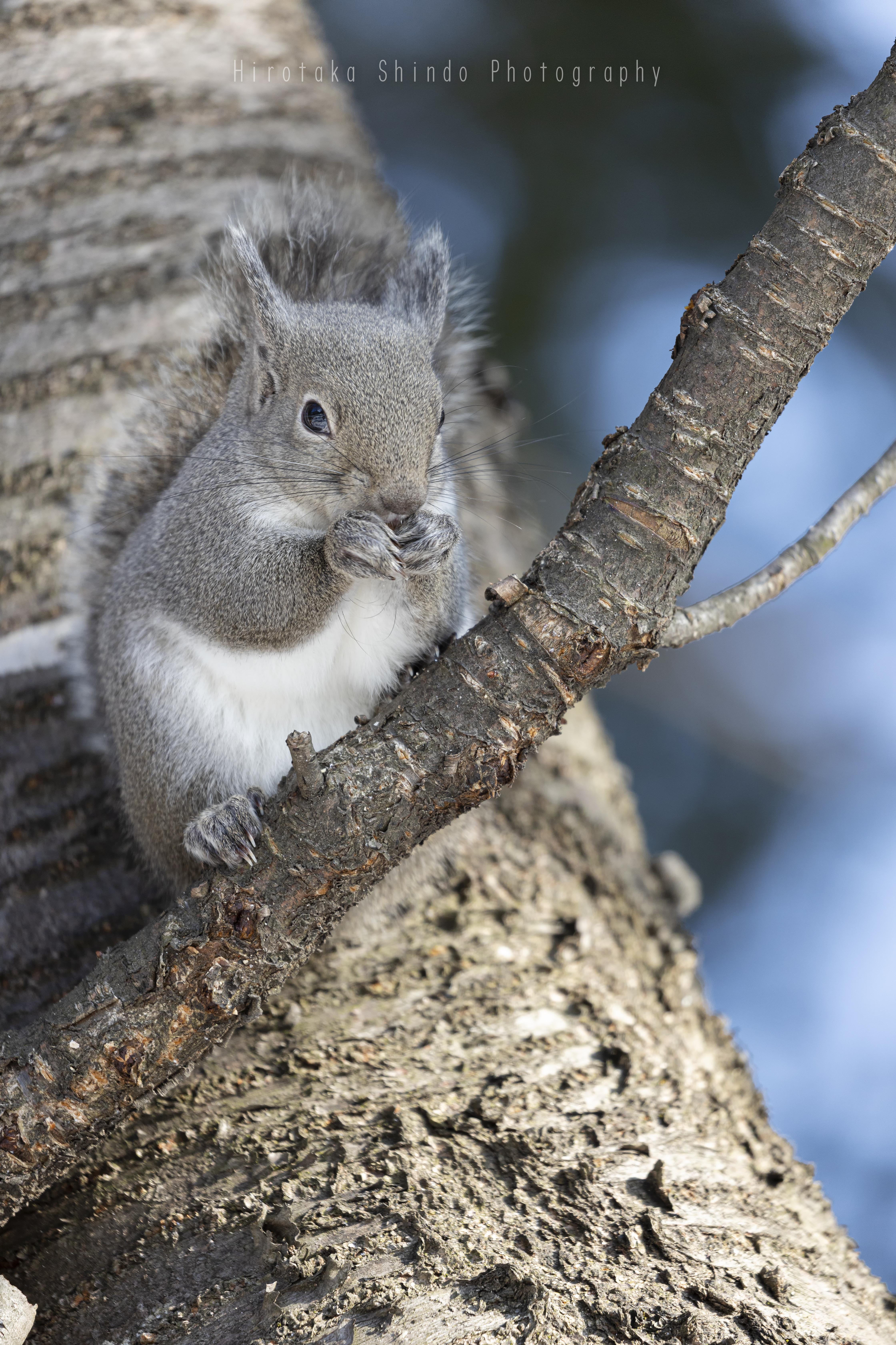 木の上で朝食を