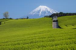 富士のある暮らし