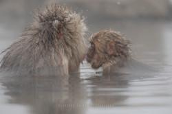 Kiss me,Mama