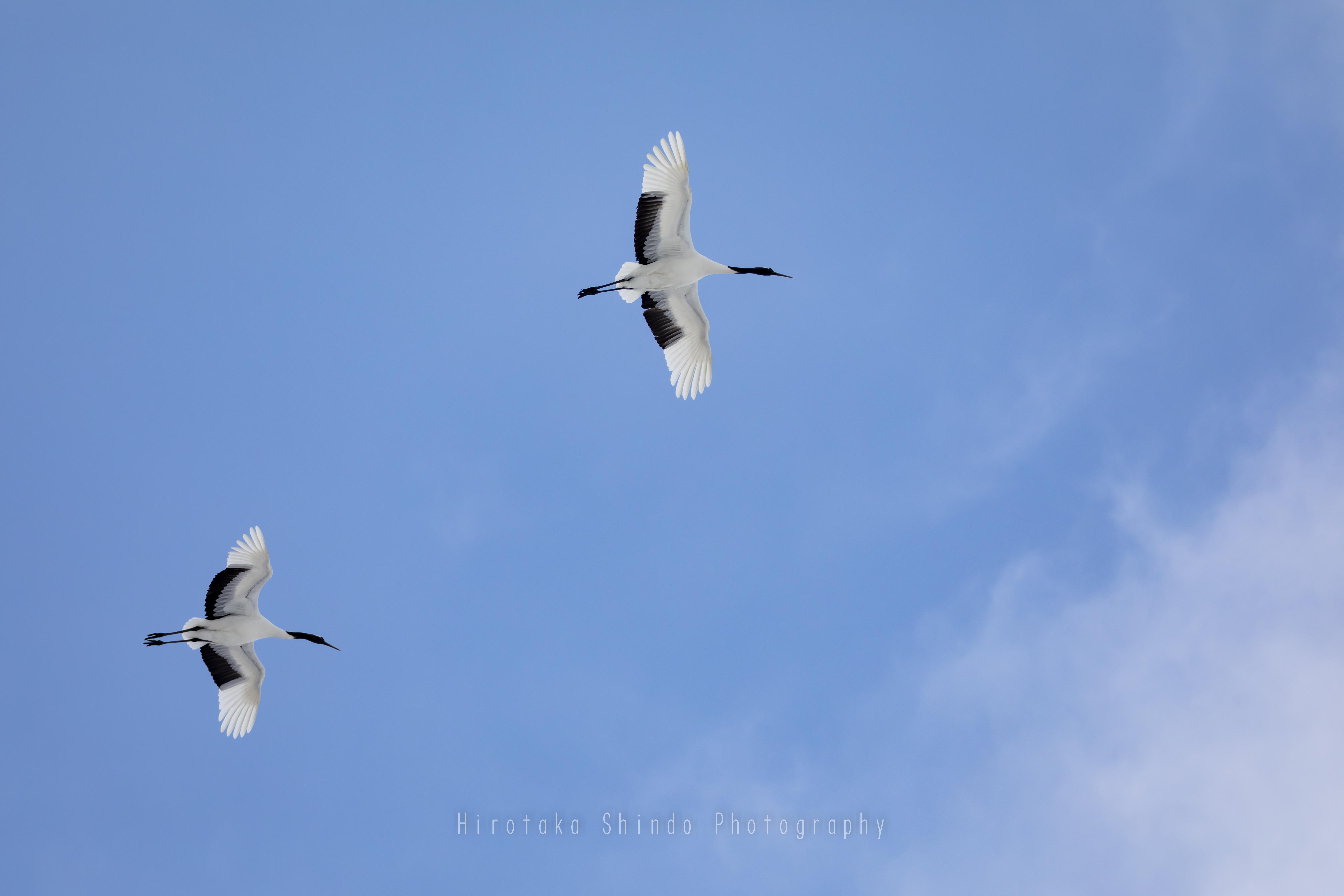 Fly High !!