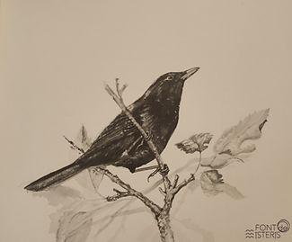 Il·lustració_llibre_aucells_esquius-1.