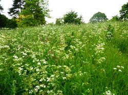 Meadow Regime, Kew Gardens