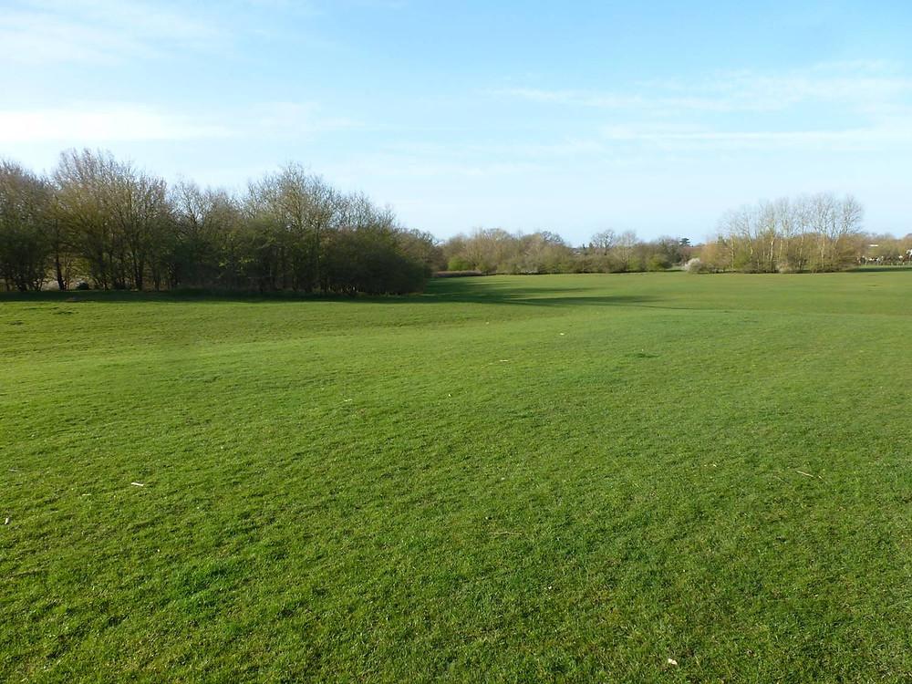 Wokingham parkland before new regime; whole area cut regularly