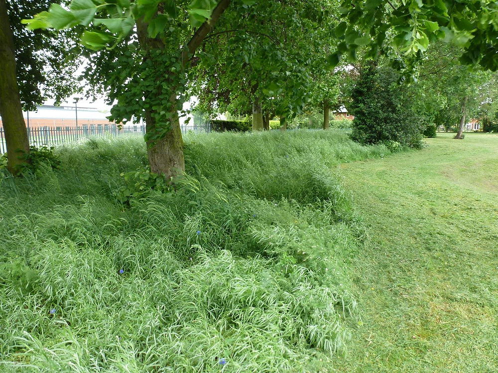 Previously this grass was cut up to the fence! Why?