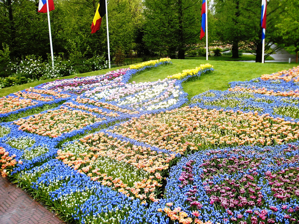 Tulips in a carpet-style bed at Keukenhof Gardens, Netherlands
