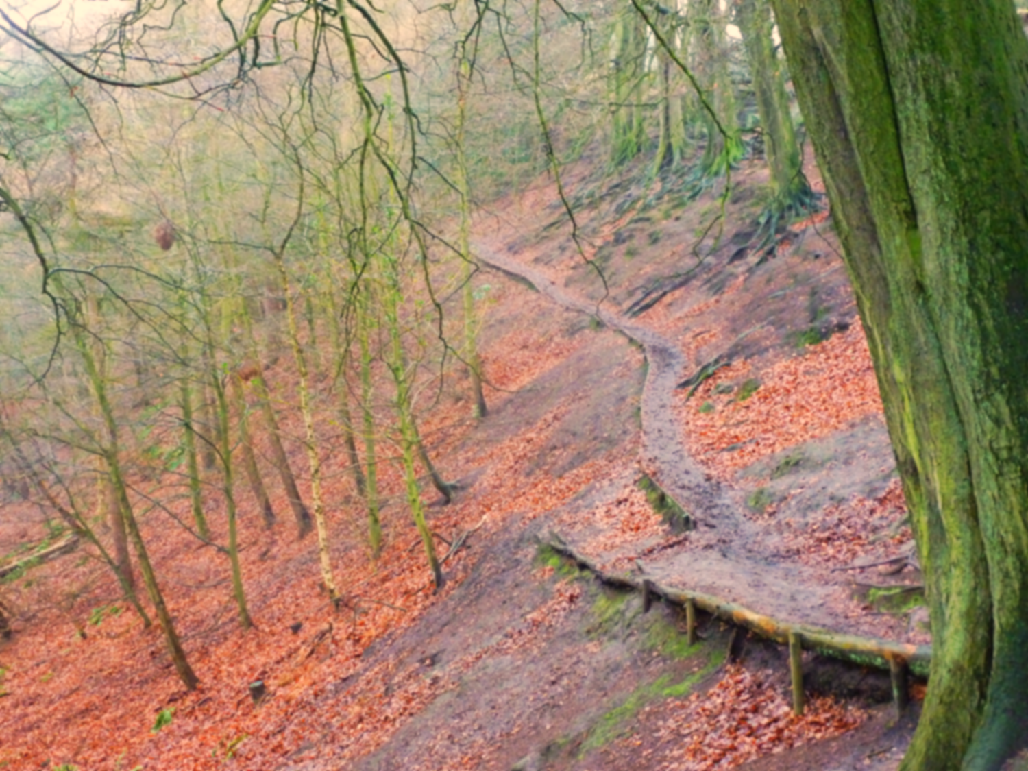 Footpath, Alderley Edge, Cheshire