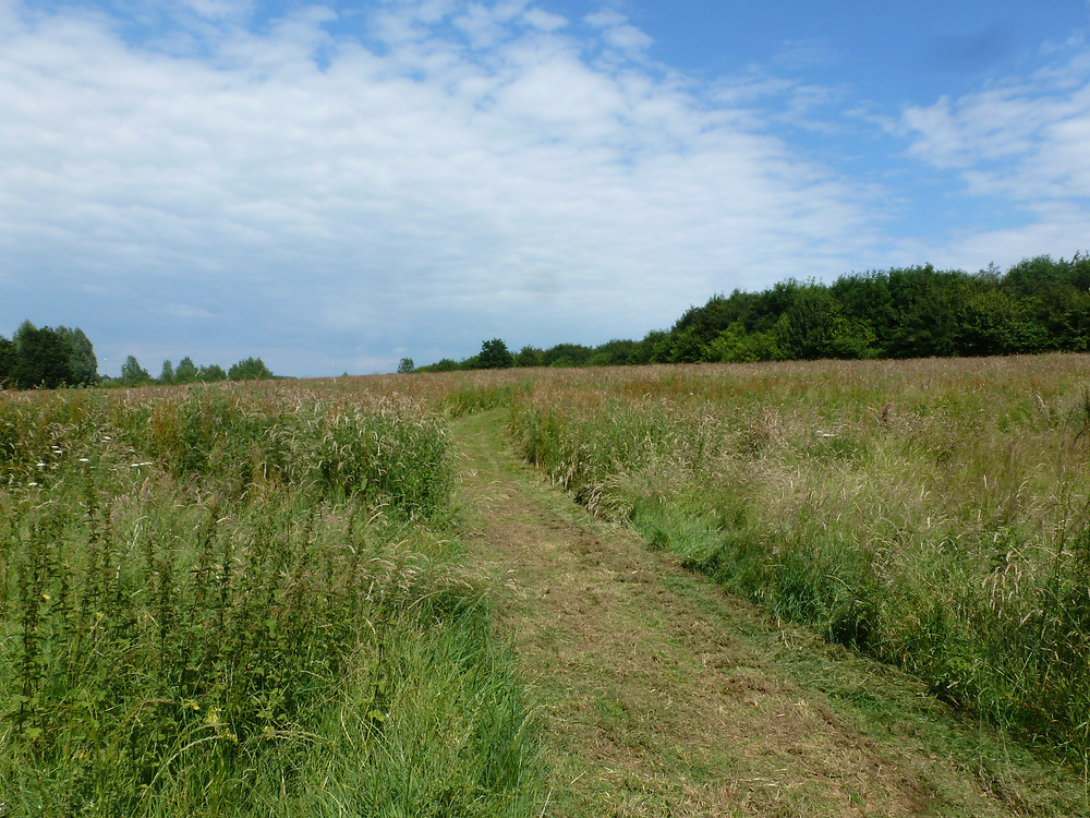 Long grass regimes are important for pollinating insects