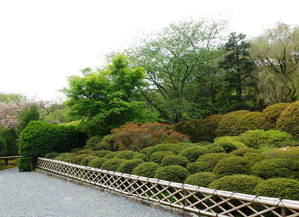 Karikomi at Ryoanji Gardens, Kyoto
