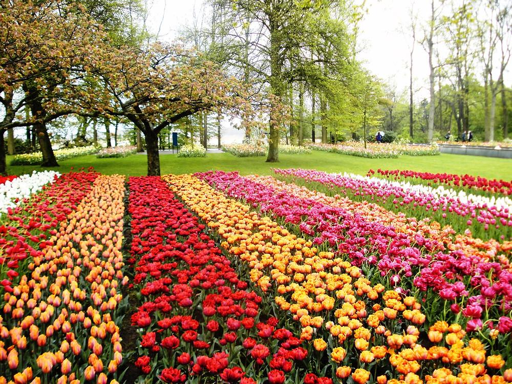 Display at Keukenhof Gardens