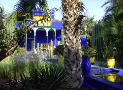 Majorelle Gardens 1, Marrakesh