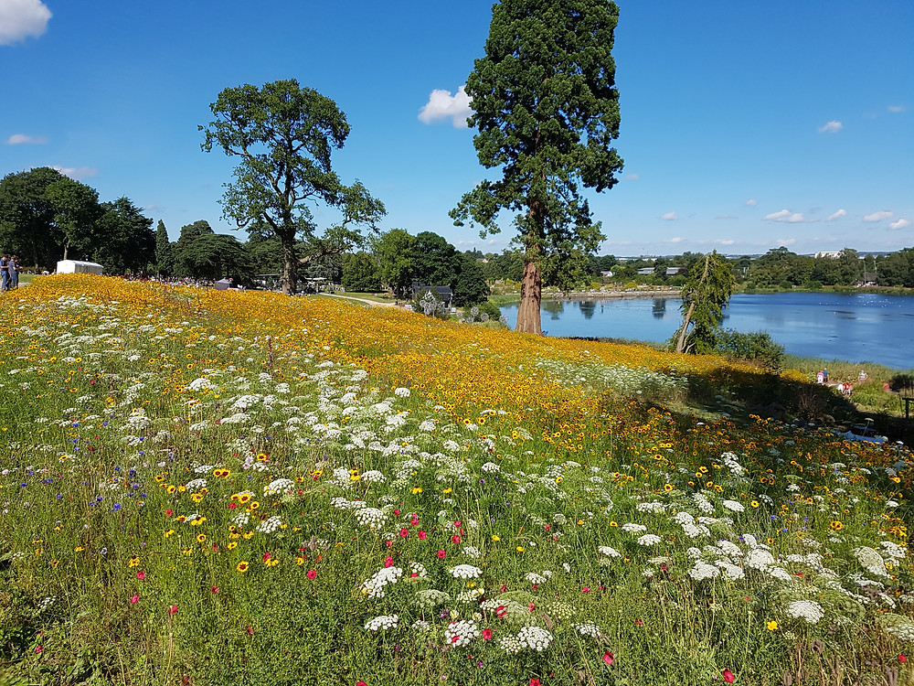 Hitchmough and Dunnet pictorial meadow, Trentham