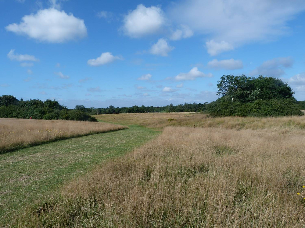 The same Wokingham parkland in first year of long grass regime