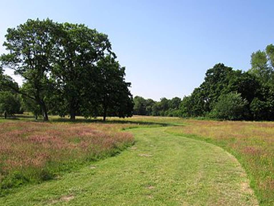 Canley Park, Wokingham in first year of long-grass trials