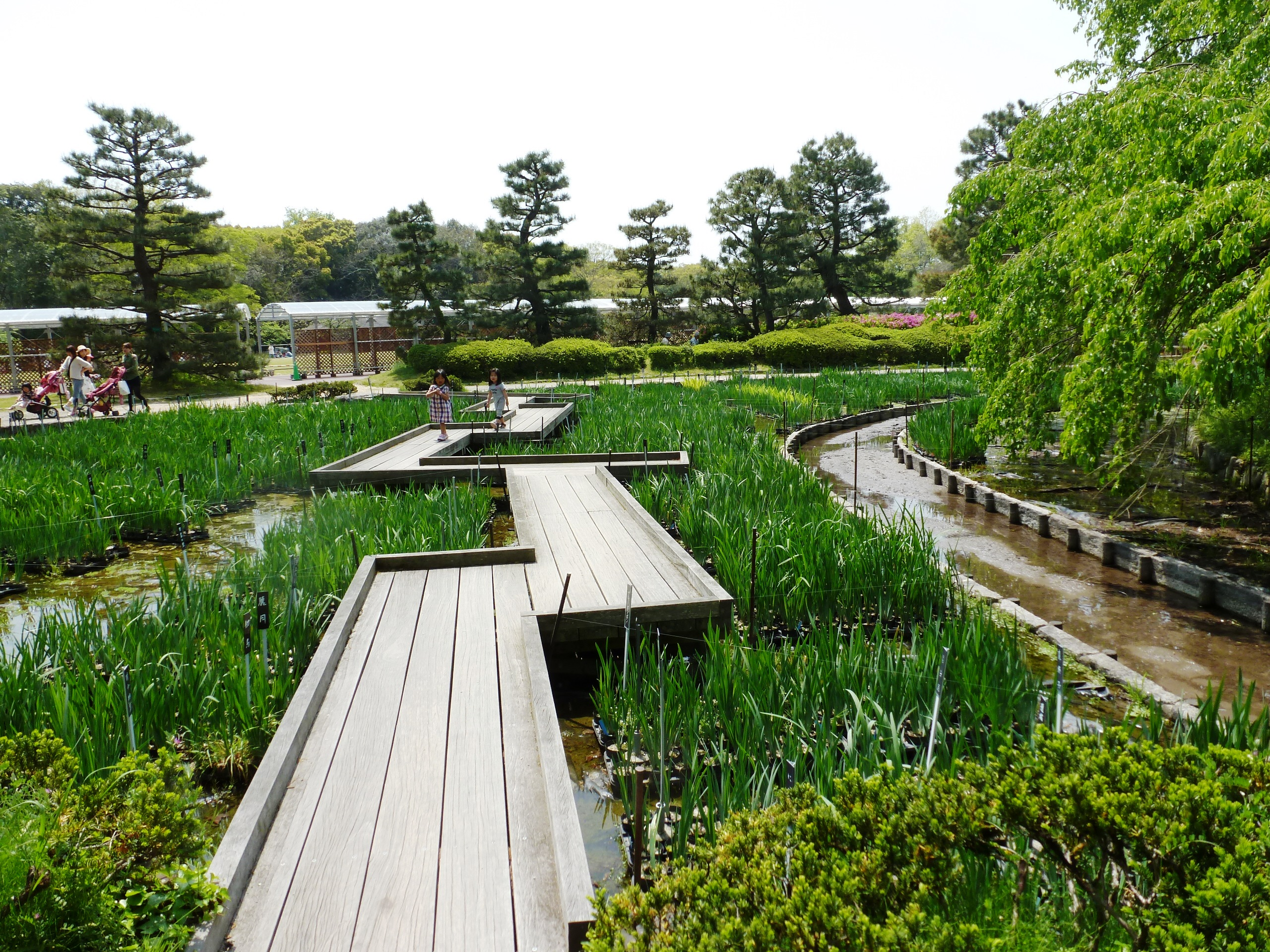 Botanic Gardens, Kyoto, Japan