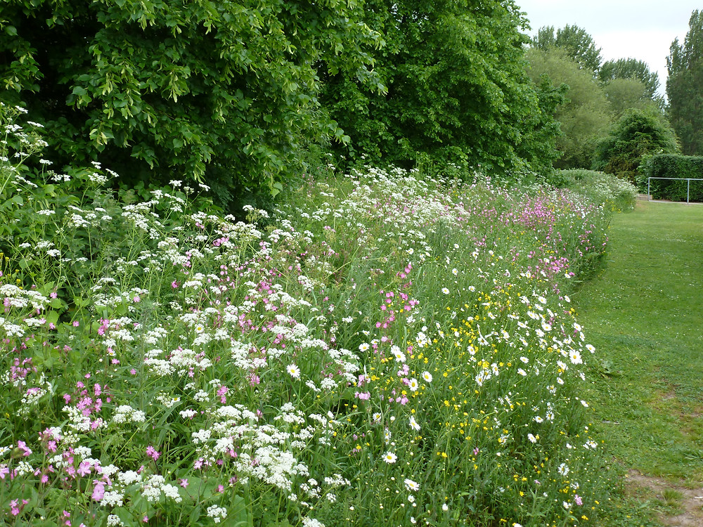 Native wildflowers should be used in natural areas