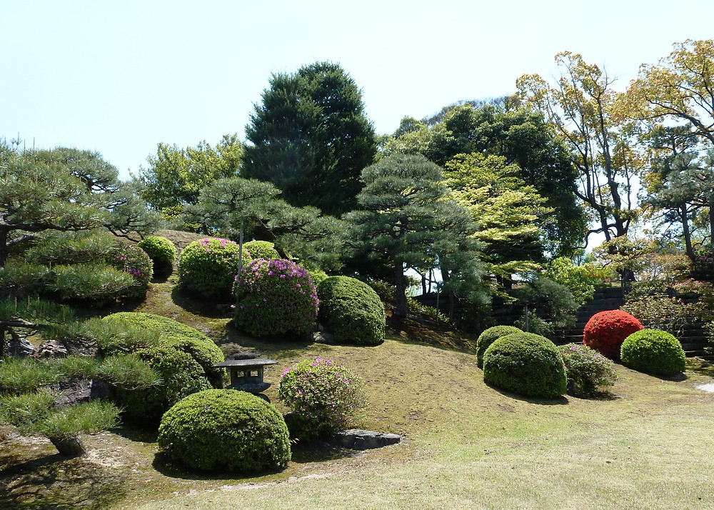 A range of pruning styles in a Kyoto temple garden