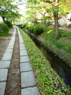 The Philosopher's Walk, Kyoto, Japan