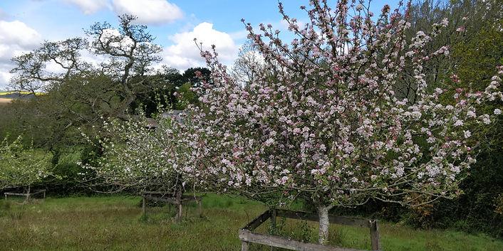 orchards1.jpg